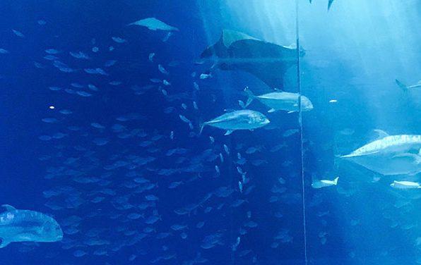 My Plenty Of Fish Experience